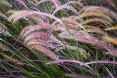 Övre sparat blommagräs för slut royaltyfri fotografi