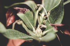 Övre textur för frodigt växtslut Arkivfoto