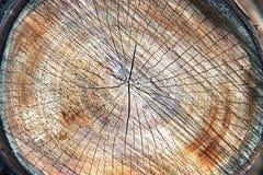 Övre textur för slut av trädstubben Sågad timmerträbakgrund arkivbilder