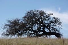 övre tree för kull Royaltyfria Foton