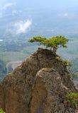 övre tree för rocks Arkivfoton