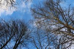 övre trees Royaltyfri Foto