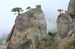 övre trees för rocks Royaltyfria Foton