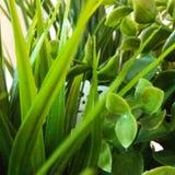 Övre växt för Leavs slut Arkivfoto