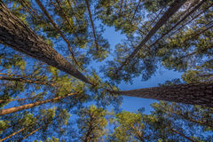 Övrefilialer av ett träd Fotografering för Bildbyråer
