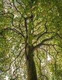 Övrefilialer av treen Arkivfoto