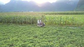 Övresiktsparet rider sparkcykeln förbi havrefält i afton arkivfilmer