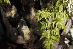 Övrestamdetalj av palmträdbakgrundstextur Fotografering för Bildbyråer