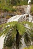 ÖvreStevenson Falls Marysville Victoria Natural vattenfall arkivbild