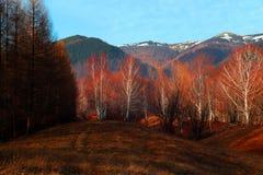 Última caída e invierno temprano en las montañas Imágenes de archivo libres de regalías