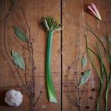 A última flor do clivia na tabela de madeira Fotografia de Stock