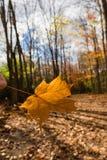 A última folha contra a floresta está vazia Imagem de Stock