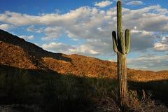 Última hora de la tarde del desierto de Arizona Imagenes de archivo