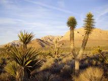 Última luz en flora del desierto Fotografía de archivo libre de regalías