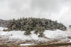 Última neve na primavera Fotografia de Stock