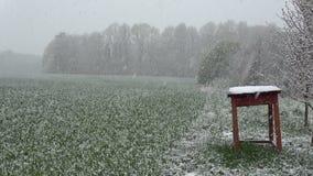 Última nieve de la primavera que cae en el campo de trigo y la tabla de madera vieja, cámara lenta metrajes