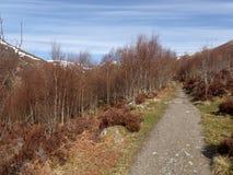 Última opinión de la primavera del bosque de Aberarder, Creag Meagaidh, en un día soleado brillante Fotografía de archivo