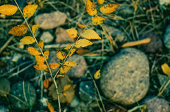 Última opinión del otoño Imágenes de archivo libres de regalías