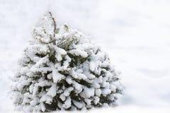 Última respiração do inverno Fotografia de Stock