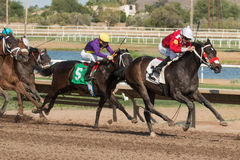 Últimas corridas de cavalos no Arizona até a queda Foto de Stock Royalty Free