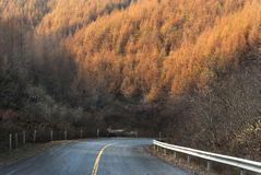 Último amarillo del otoño Fotografía de archivo