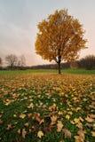 Último das folhas fotografia de stock