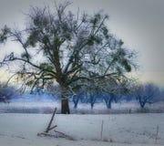 Último invierno Imagen de archivo libre de regalías