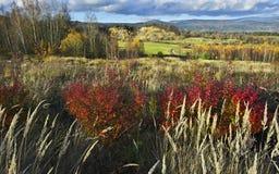 Último otoño Imagenes de archivo