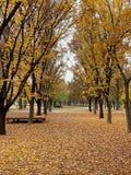 Último otoño con las naturalezas fotografía de archivo libre de regalías