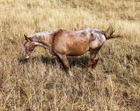 Último otoño en Altai Fotos de archivo libres de regalías