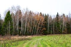Último otoño en bosque del pino, campo abierto Foto de archivo libre de regalías