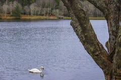 Último otoño en el lago Fotos de archivo libres de regalías