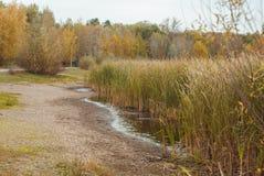 Último otoño en el parque, Imágenes de archivo libres de regalías