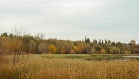 Último otoño en el parque, Imagenes de archivo