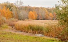 Último otoño en el parque, Fotos de archivo libres de regalías