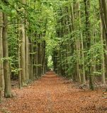 Último otoño en una madera inglesa Foto de archivo libre de regalías