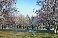 Último paisaje del otoño en el parque de la ciudad en el día soleado Fotografía de archivo