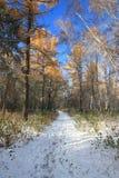 Último paisaje del otoño - primera nieve en bosque mezclado Fotos de archivo libres de regalías