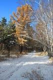 Último paisaje del otoño - primera nieve en bosque mezclado Fotografía de archivo