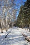 Último paisaje del otoño - primera nieve en un parque Fotos de archivo