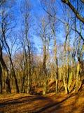 Último parque del invierno listo para hacer frente a la primavera, Kamenets Podolskiy, Ucrania Fotos de archivo
