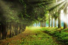 Último parque impresionante del saummer Imagenes de archivo