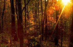 Último sunray Foto de Stock Royalty Free