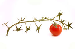 Último tomate Foto de Stock