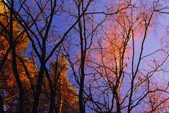 Últimos dias do outono dourado Fotos de Stock