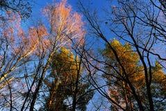 Últimos dias do outono dourado Foto de Stock