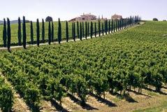 Úmbria - exploração agrícola com vinhedos e ciprestes Foto de Stock