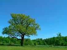 Única árvore imagem de stock