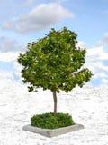 Única árvore fotos de stock