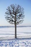 Única árvore fotografia de stock